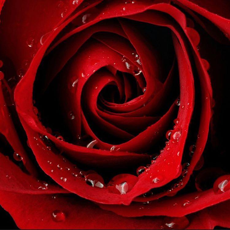 Lotta love going round! Family Day and Valentines Day Hmmmmhopehellip