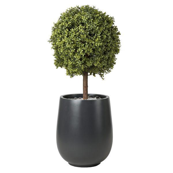 Hedge-#2-Sized