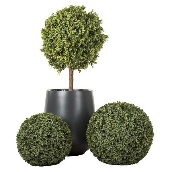 Boxwood shrub and sphere