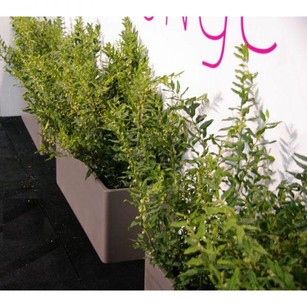 RECTANGLE Planter