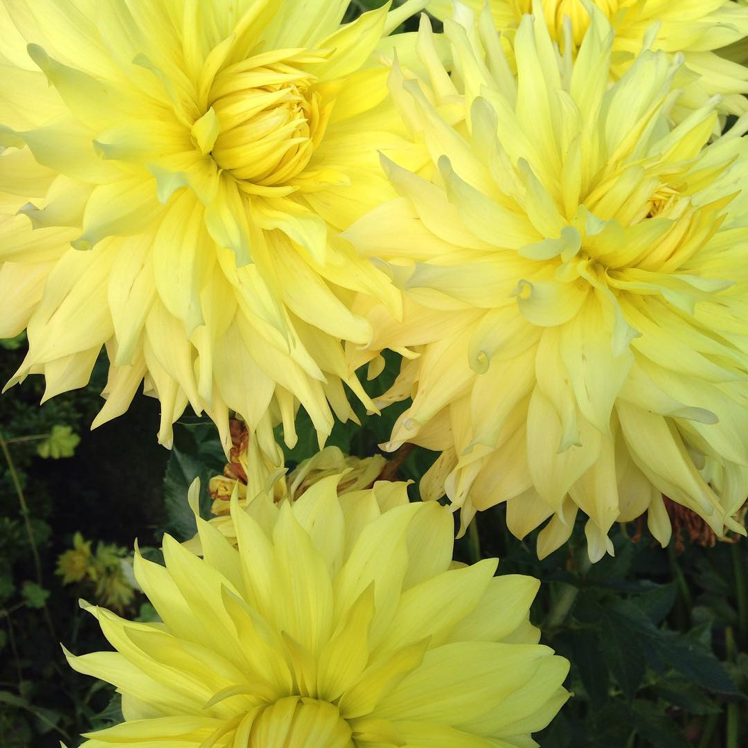 Sunshine in the sky sunshine in the garden Love thesehellip