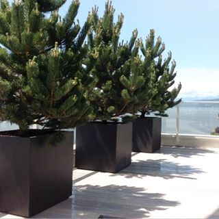 Bold and beautiful Large shrubbery in large cube planters Lookshellip
