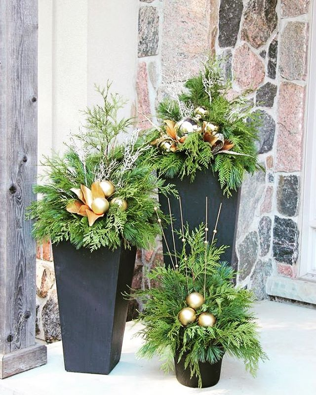 Starting to think about the holidays and festive entryways! This striking trio shows nicely with added gold accents. (Picture credit to Pinterest/Terra)