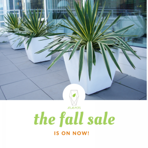 fall-sale-is-on-now