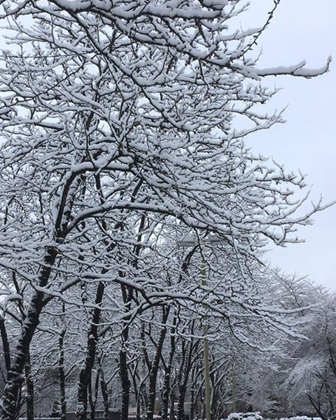 Enjoying the calm beauty of trees covered in snow Metrotown