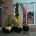 Allscapes Landscape Design