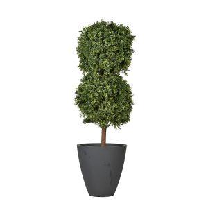 Boxwood Bush sized