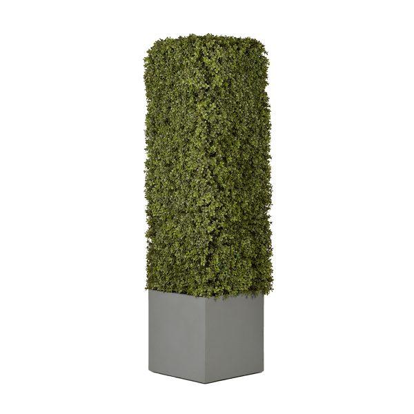 Column Shrub Large Pot Sized