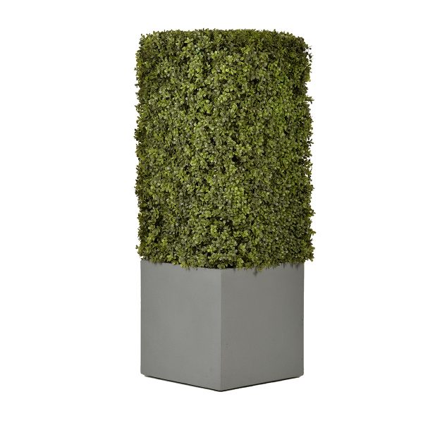 Column Shrub Small Pot Sized