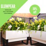 GLOWPEAR 30